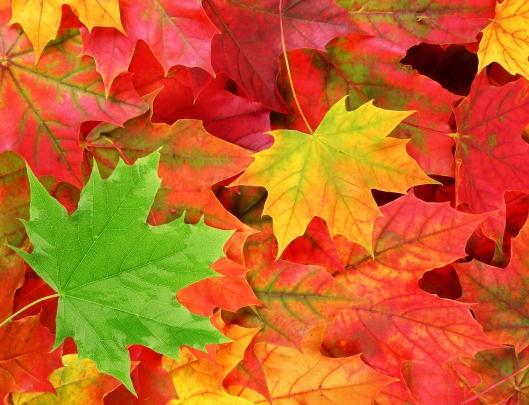 Blätter-bunt